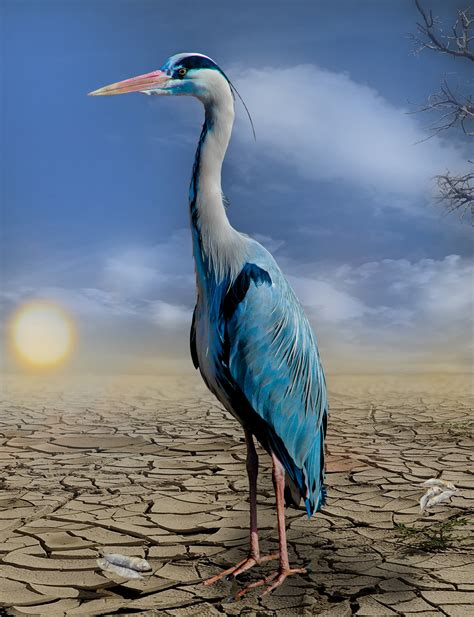 White And Blue Long Neck Bird Standing In Soil During Dry Blue Bird On Neck