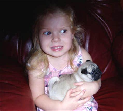 are pugs with children jorona kennels bulldogs pugs