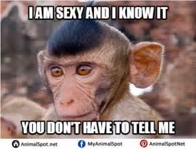 Monkey Face Meme - monkey memes