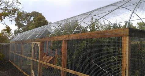 hooped run with chicken house fruit trees designed