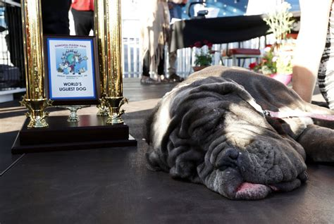 martha the martha the mastiff has been crowned the winner of the world s ugliest contest