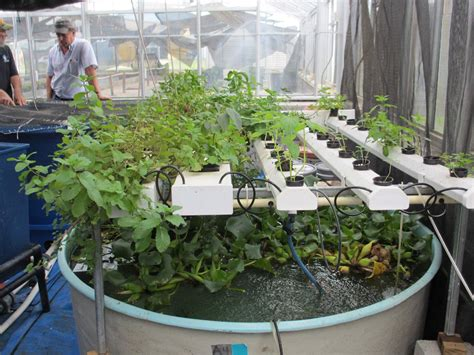 What Is Aquaponics Survival Life Aquaponics System And Aquaponic Vegetable Garden