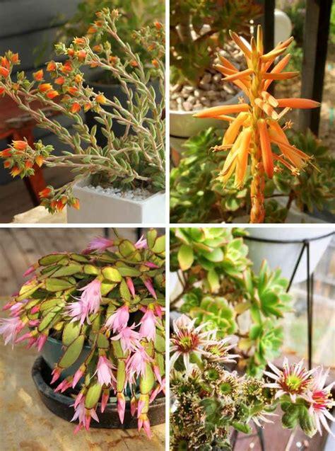 Les Plantes Succulentes by Les Plantes Succulentes Votre Guide Pratique