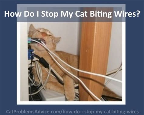 how do i my to stop biting how to stop cats from chewing on cords cats