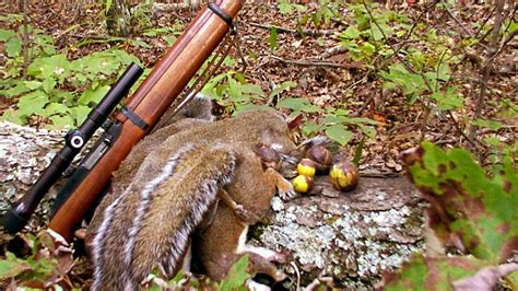 how to hunt squirrels in your backyard free on squirrel opener saturday aug 22 rhea