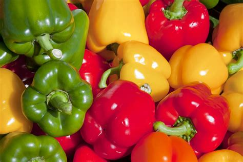 dogs bell peppers why aren t bell peppers spicy