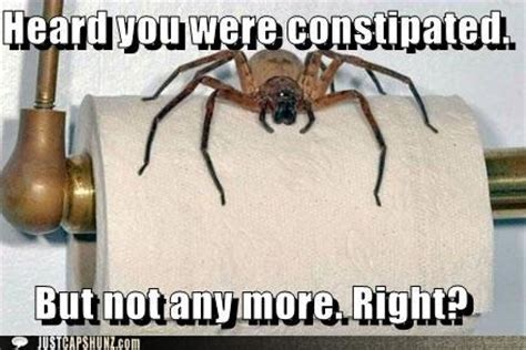 Shower Spider Meme - scary spider meme arachnophobia pinterest jokes