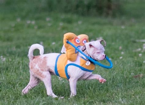 toys for blind dogs toys for blind dogs must toys for your visually impaired