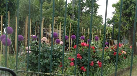 fiore a palla fiori a palla viola