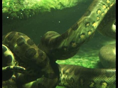 download film ular anakonda full download king cobra vs ular anaconda