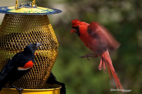 Birds   Tapan Shah