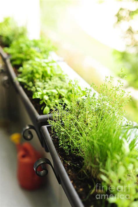 window box herb garden balcony herb garden photograph by elena elisseeva