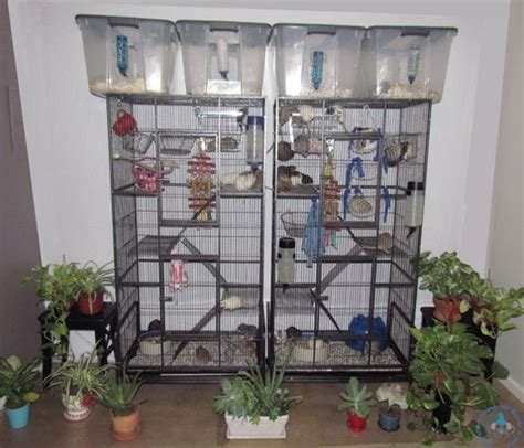 best cage best cages to buy camarattery colorado rat breeder