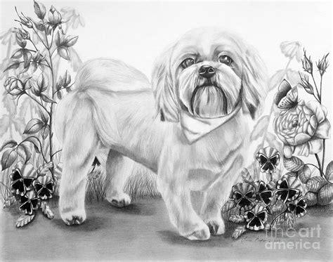 how to draw a shih tzu step by step shih tzu in color drawing by lena auxier shih tzu in color breeds picture