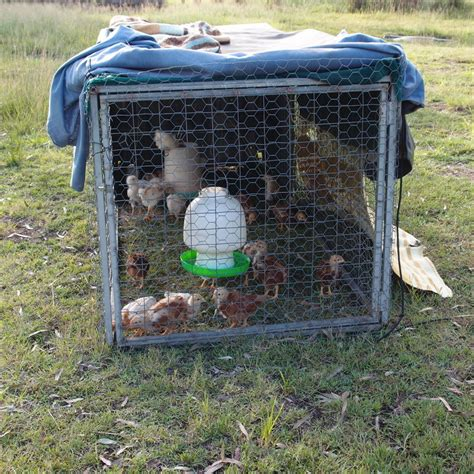 Backyard Chickens Chicken Tractor Backyard Chickens And Chicken Tractors Raising Baby