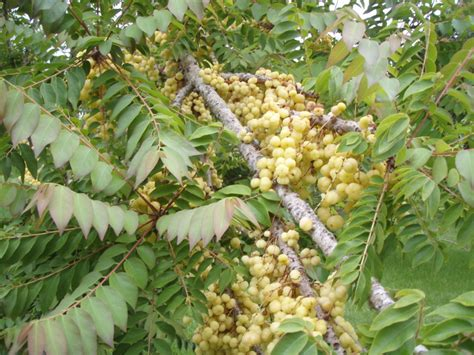 how to identify fruit trees forum help identifying tree