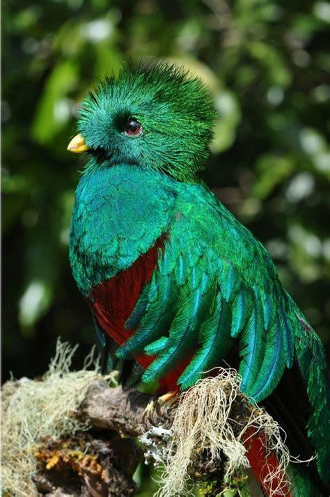 las aves exticas mi 8408127950 fotograf 237 as de aves ex 243 ticas del mundo