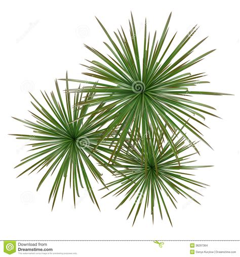 rooftop plants palm plant tree top stock illustration image of leaf