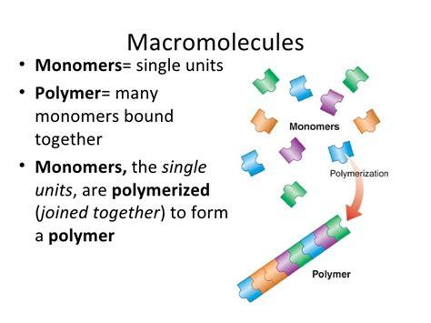 protein macromolecule biomolecules macromolecules