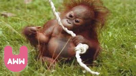 Indonesia Born newborn baby orangutan in indonesia