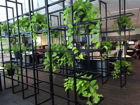 plant partition green wall for your office why vertical wall gardens are the new privacy partition