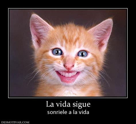 imagenes feliz lunes con gatos desmotivaciones la vida sigue sonriele a la vida