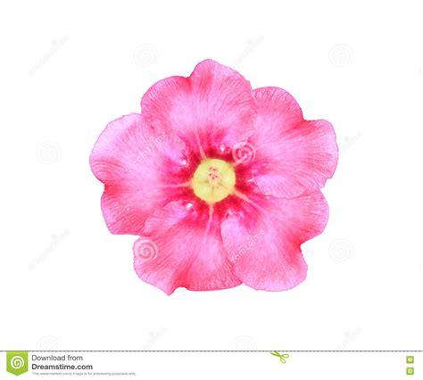 imagenes de rosas solas solas flores de la azalea imagen de archivo imagen de