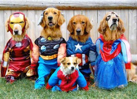 halloween large dog costume ideas