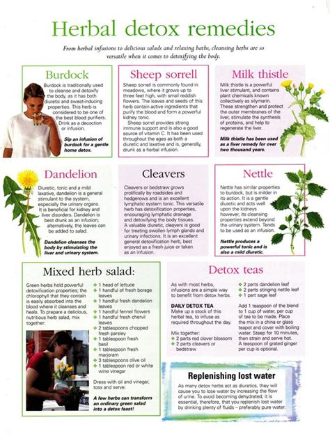 What Herb Detoxs The From X Rays by Herbal Detox Detox And Remedies On