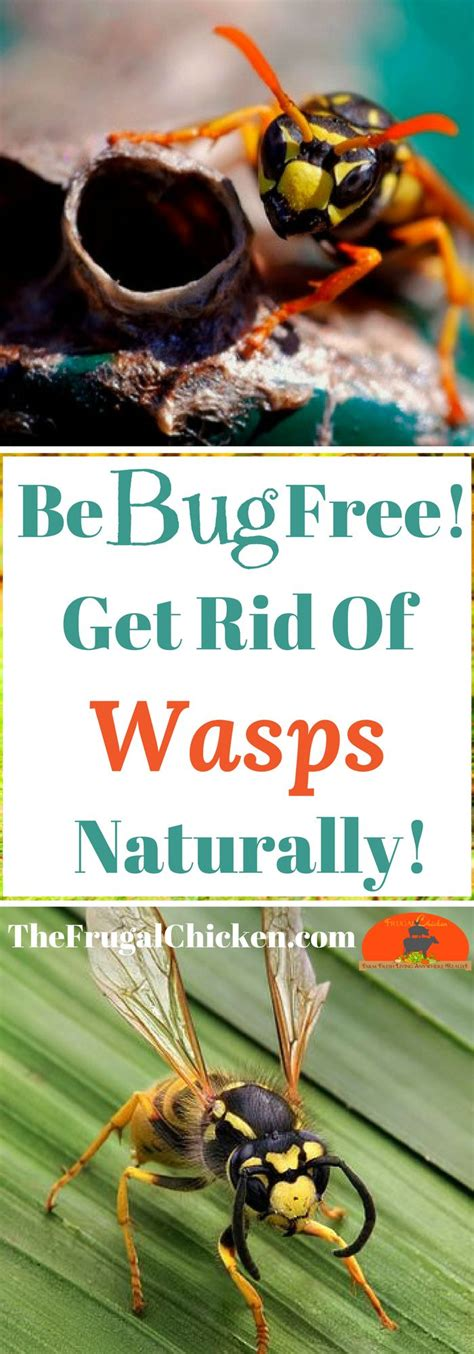 how to get rid of wasps in backyard 7133 best images about diy outdoors on pinterest