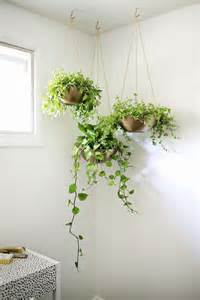 Decor Plants Home 25 Best Ideas About Indoor Hanging Plants On Hanging Plants Hanging Plant And
