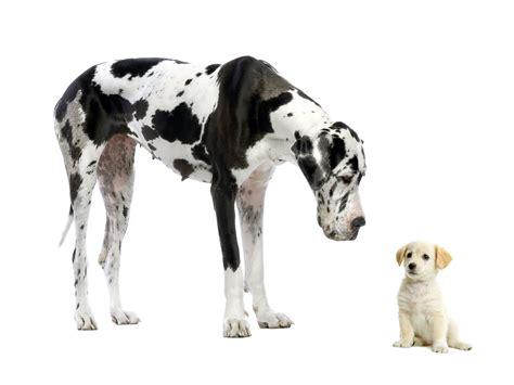 Hochwertige Bilder by Bilder Neugierigen Hunden Und Welpen Qualitativ