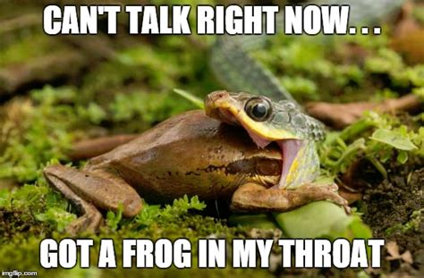 Snake Meme - funny snake meme can t talk right now got a frog in my