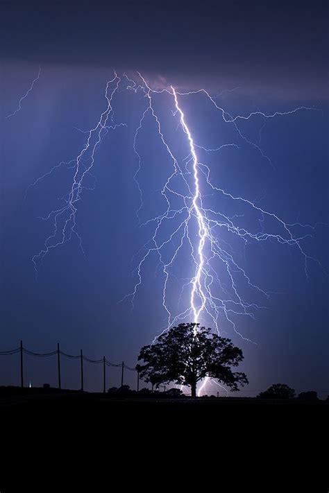 lightning strike tree lightning strike tree