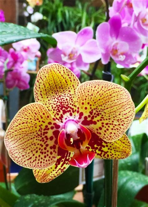 5 of the most popular questions about orchid care garden