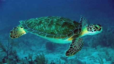 imagenes de libres y tortugas donde viven las tortugas que comen como nacen