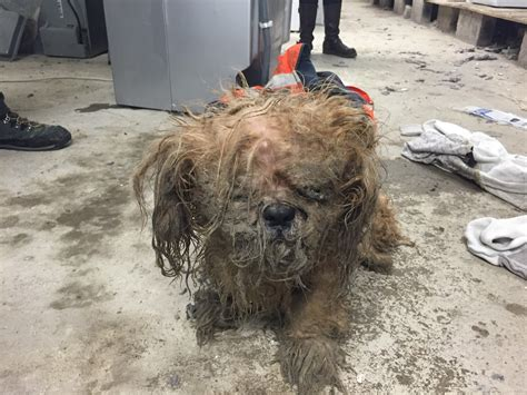 abandoned dogs abandoned dog rescued from cold and rain in plymouth the plymouth daily