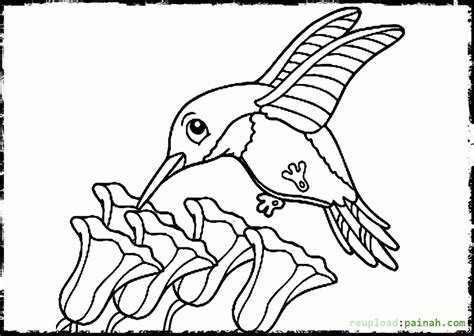 Hummingbird Coloring Page by 90 Hummingbird Coloring Pages Hummingbird Coloring