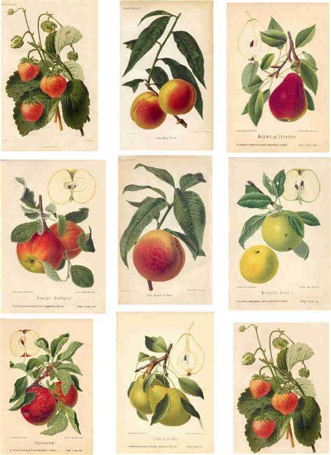 printable fruit poster vintage fruit poster botanical prints pinterest