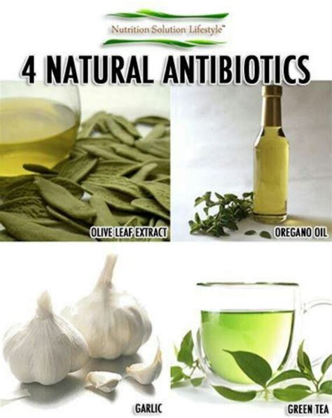 antibiotics healthy foods and their functions