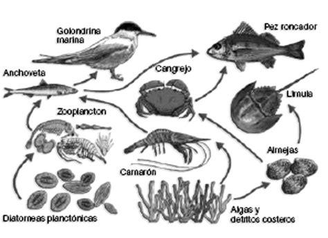 cadenas alimenticias y acuaticas cadenas tr 243 ficas ejercicios ciencias experimentales