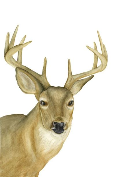 whitetail deer home decor woodland deer watercolor painting whitetail buck home