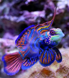 bright colors images bright colored fish wallpaper and