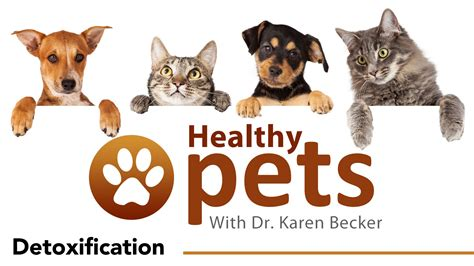 Mercola Vaccine Detox by Dr Becker Discusses Pet Detoxification