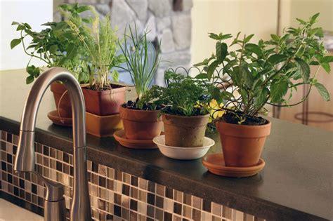 organic herbs   smart choice   home herb garden