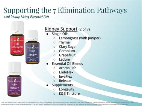Essential Oils To Detox Kidneys by 17 Best Images About Kidneys On
