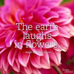 flower quotes just love the white and happy earth