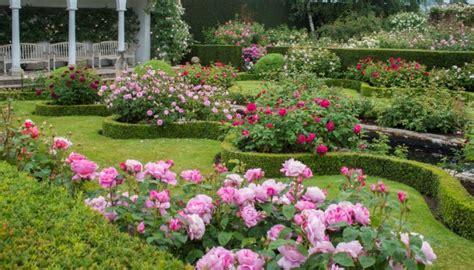 creating  fragrant rose garden carpenters nursery