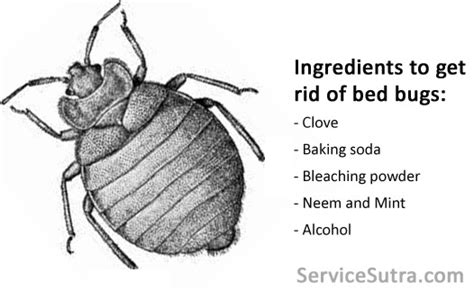 home remedies   rid  bed bugs