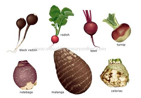 exles of root vegetables auntie e s kitchen roasting root vegetables